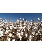 le coton, fibre naturelle