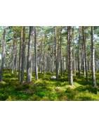 le tencel, fibre naturelle textile issue du bois d'eucalyptus.